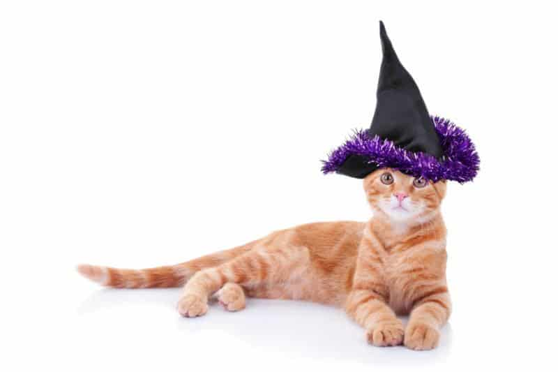 Cat in witches hat